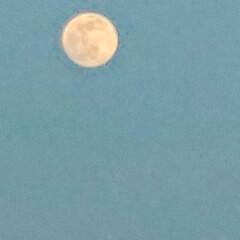 「4月27日の満月 ピンクムーン  月の色…」(1枚目)