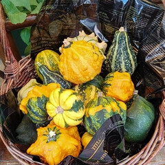 作業部屋 収穫の秋🌾   おもちゃかぼちゃ🎃  食…(1枚目)