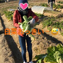 たっぷり野菜/収穫/畑/寒い 今日は早朝から夫の趣味の畑へ 野菜の収穫…(4枚目)