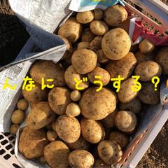たっぷり野菜/収穫/畑/寒い 今日は早朝から夫の趣味の畑へ 野菜の収穫…(7枚目)