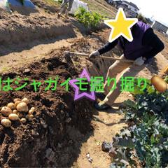 たっぷり野菜/収穫/畑/寒い 今日は早朝から夫の趣味の畑へ 野菜の収穫…(5枚目)