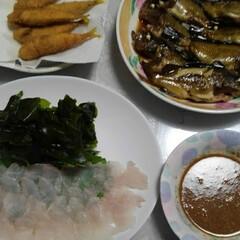 「釣った魚🐟で晩御飯🌃🍴  #カサゴのお刺…」(1枚目)