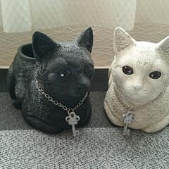 ニャンコ/猫/鉢/にゃんこ同好会/雑貨 ニャンコ型鉢到着しました(⌒_⌒)