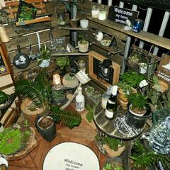 ソーラーライト/ステンシル/多肉植物/ロープでマット/自作ケーブルドラム/DIY/... ベランガーデン ワンバイでフェンス 棚板…