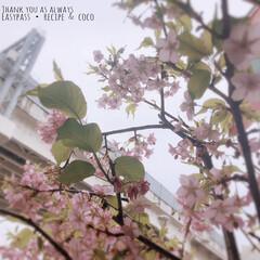 LIMIAおでかけ部/おでかけ/風景/春の一枚 桜…(⑉︎• •⑉︎)♡︎(1枚目)