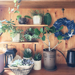 板壁DIY/棚/多肉植物/観葉植物/デニムリースハンドメイド/DIY/... ポイントはデニムリースで 夏らしく♪( …