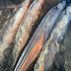 お客様の財布👛に優しい魚屋さん/仙台の魚屋さん 画像だけをおとどけ(笑)     パタ…