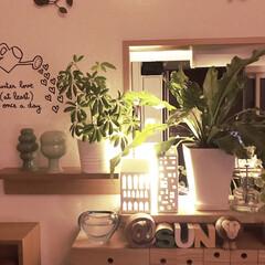 間接照明/壁に付けられる家具/インテリア/無印良品 今日も一日お疲れ様です💕