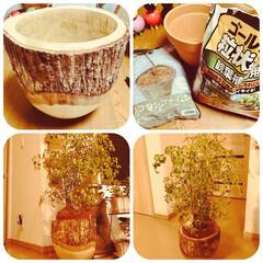 植え替え/鉢カバー/観葉植物 存在感ある鉢カバーに お気に入りグリーン…