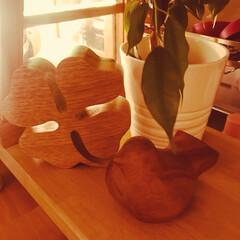 間接照明/インテリア/雑貨 アカシアの木で作られた 四つ葉のクローバ…