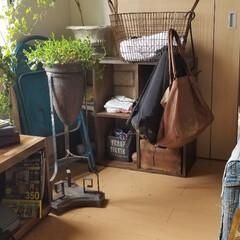 グリーン/インテリア/家具/住まい/ファッション/ハンドメイド グリーンと什器 6畳コーデ