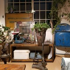 多肉/グリーン/雑貨/インテリア/住まい/ファッション/... グリーンがガチャガチャした部屋