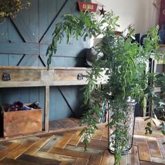 グリーン/DIY/雑貨/インテリア/家具/住まい/... グリーンのある暮らし