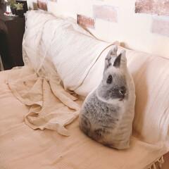 明るくなりました/うさぎクッション/ニトリ/うさぎ雑貨/お部屋作り/お気に入りの場所/... 布団ソファーをきっちりローソファーにすべ…