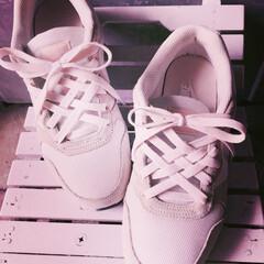 ワンポイント/おしゃれ/楽しかった/簡単/可愛い/スニーカー/... スニーカーの靴紐結びを飾り結びにしました…