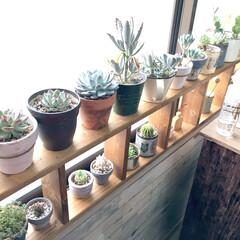 植物棚/DIY/室内管理/室内グリーン/リメイク鉢/多肉植物/... キッチンの窓際のこの眺めがお気に入り〜〜…