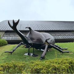 博物館/おでかけ/カブトムシ/恐竜/化石 自然史博物館に行ってきました!(1枚目)