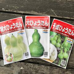 グリーンカーテン/ひょうたん/平成最後の一枚 今年もひょうたん栽培します!