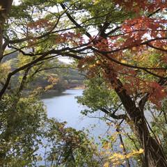 湖/紅葉/秋 碓氷峠近くにある碓氷湖に紅葉狩りに、行っ…