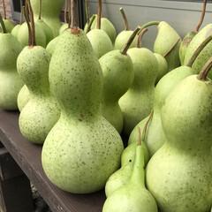 ひょうたん/栽培/収穫/夏の思い出 今日収穫したひょうたんです!毎年栽培して…