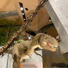 博物館/おでかけ/カブトムシ/恐竜/化石 自然史博物館に行ってきました!(2枚目)