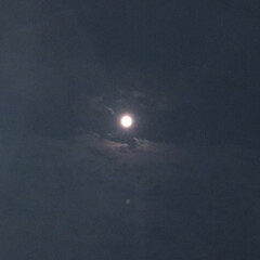 月/中秋の名月 中秋の名月!秋ですねぇ〜!