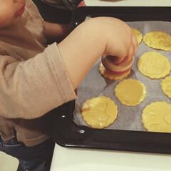 親子で楽しく/2歳/女の子ママ/動物クッキー/こどものいる暮らし/手作りクッキー/... バレンタインに向けて 子どもたちと型抜き…