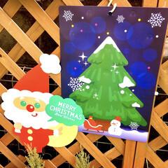 ラティスフェンス/お庭DIY/お庭/こどものいる暮らし/建売住宅/クリスマスインテリア/... クリスマスがやってきた!コンテストに参加…(1枚目)