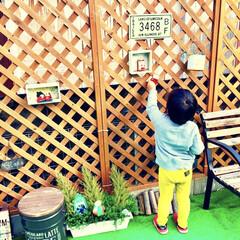 お手伝い/息子/4歳/こどものいる暮らし/カフェ風インテリア/カフェ風/... ハロウィンが終わったので 庭を徐々にクリ…
