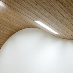 照明 天井の曲面は口の中をイメージさせます。