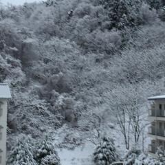 雪ふったどー/一晩でつもったー❄️😰 寒い寒いと思ったら 一晩でこの景色❄️😖…