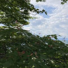 歴史人物には興味なく😅/ゴールデンウィーク中麒麟イベント/景色風景/城 〜may  3〜 🐿さんとたわむれた後は…(3枚目)
