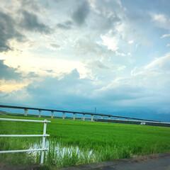 空/風景写真 〜18じの景色〜 新幹線🚅と緑広がる田ん…(1枚目)