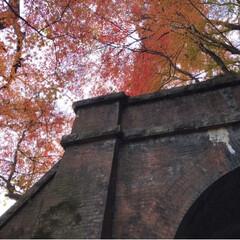 紅葉🍁/愛岐トンネル群/おでかけ/旅 *先週末* 紅葉🍁めでながらの片道1.7…(8枚目)