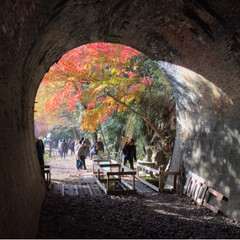 紅葉🍁/愛岐トンネル群/おでかけ/旅 *先週末* 紅葉🍁めでながらの片道1.7…(5枚目)