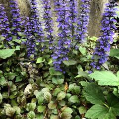 春のフォト投稿キャンペーン/おでかけ/風景/わたしのGW 清らかな水辺に生息する花々(*´꒳`*)…(1枚目)