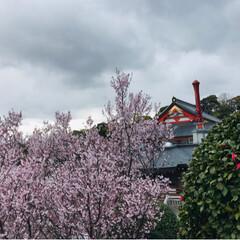 Cherry blossom❤︎/N Box/春のフォト投稿キャンペーン/おでかけ/春の一枚 3月31日納車び❤︎ すごくすご〜く待ち…(3枚目)