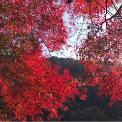 紅葉🍁/愛岐トンネル群/おでかけ/旅 *先週末* 紅葉🍁めでながらの片道1.7…(6枚目)