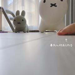 雑貨/シンプル/モノトーン/オシャレ/モノトーングッズ/長女宅にて/... *ミッフィ🐰あそび* まごっち1号ちゃん…(1枚目)