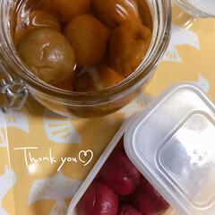 梅酢漬け/梅干し おはようございます(*´꒳`*) ☔️よ…