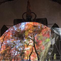 紅葉🍁/愛岐トンネル群/おでかけ/旅 *先週末* 紅葉🍁めでながらの片道1.7…(1枚目)