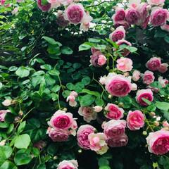 garden/令和元年フォト投稿キャンペーン/至福のひととき/LIMIAおでかけ部/おでかけ/風景/... Garden No.8 姫になれるひとと…