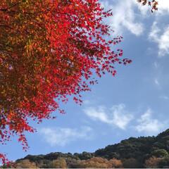 紅葉🍁/愛岐トンネル群/おでかけ/旅 *先週末* 紅葉🍁めでながらの片道1.7…(3枚目)