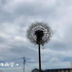3時の休憩/梅雨空/たんぽぽの綿毛 *梅雨空*  東海地方の隅っこ暮らし(*…(1枚目)