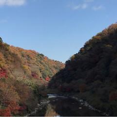 紅葉🍁/愛岐トンネル群/おでかけ/旅 *先週末* 紅葉🍁めでながらの片道1.7…(4枚目)