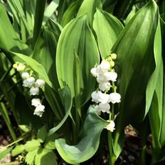 春のフォト投稿キャンペーン/おでかけ/風景/わたしのGW 清らかな水辺に生息する花々(*´꒳`*)…(2枚目)