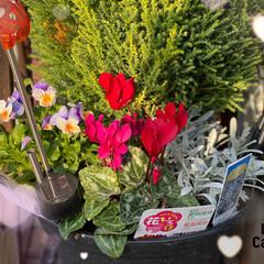 ハロウィン/100均deハロウィン 玄関口のお花です。 我が家にお花はこれだ…