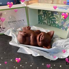 チョコレート 息子にバレンタインにもらったチョコレート…(1枚目)