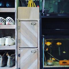 水槽/隙間収納/靴箱/アイデア投稿もしています/玄関あるある/玄関インテリア/...  玄関の靴箱と水槽の間に 隙間収納のキャ…