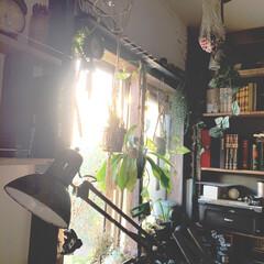 明日新しいアイデアが公開になります/本棚/窓まわり/アイデア投稿もしています/インスタグラムやってます/ブログ書いてます/... 窓まわりをちょっと変えました。 木箱を取…